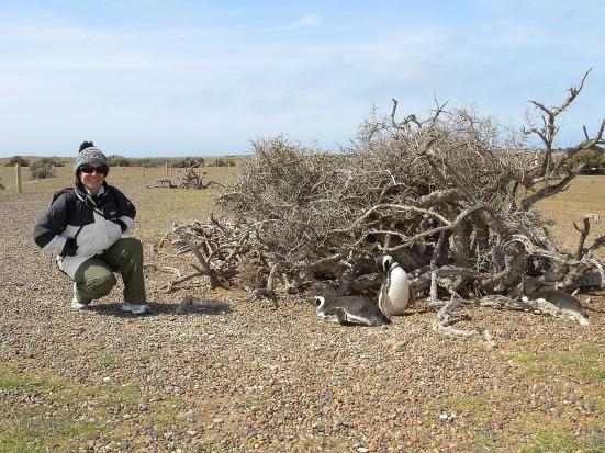 Pinguini di Magellano a Punta Tombo in Argentina