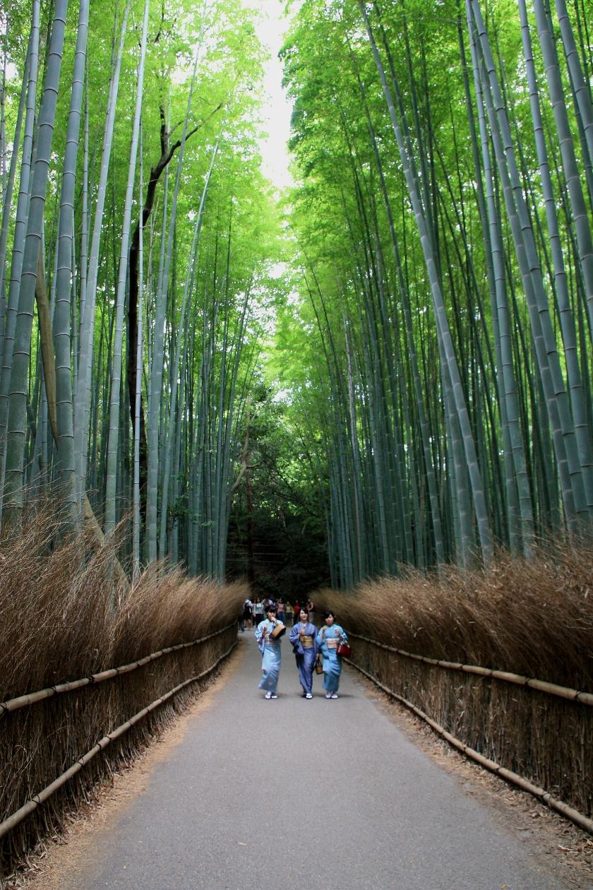 Il bosco di bambu di Kyoto