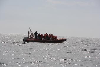 Gommone Zodiac alla ricerca delle balene nella Penisola di Valdes