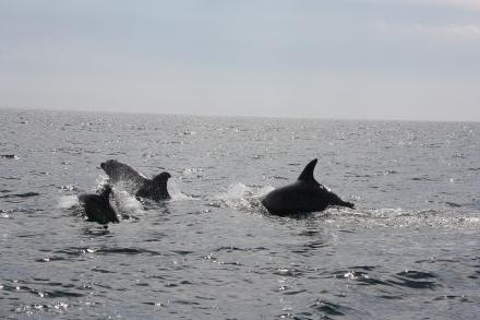 Delfini a Setubal in Portogallo