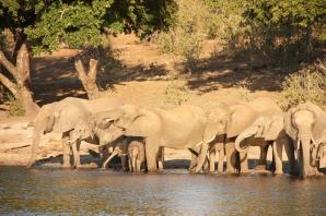 Elefanti nel Chobe National Park
