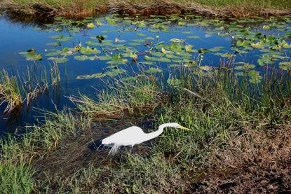 Evergledes National Park