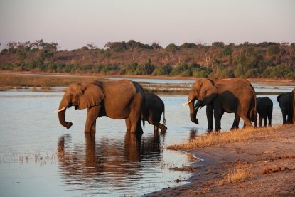 Elefanti al bagno nel Chobe National Park Botswana