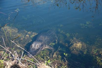 Everglades N.P.