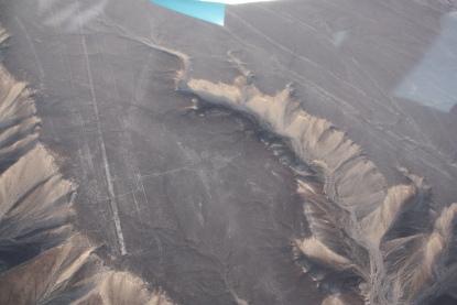 Condor - Linee di Nazca