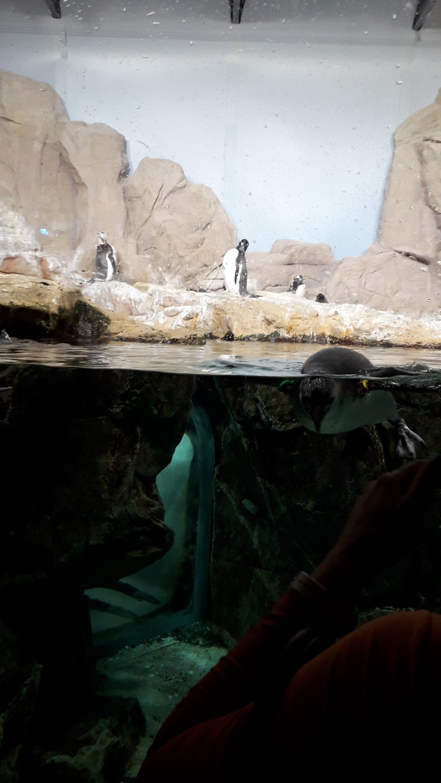 Acquario di Genova Pinguini