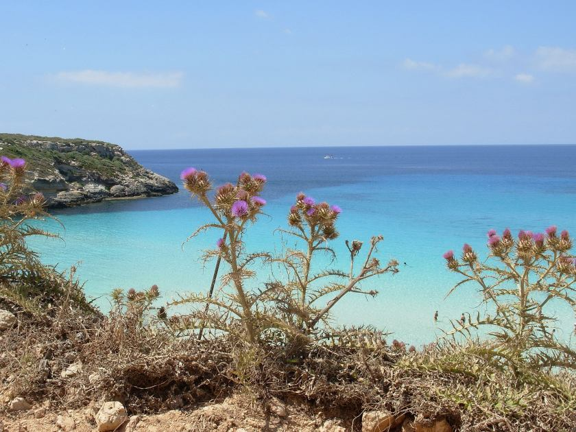 Fiori e mare a Lampedusa