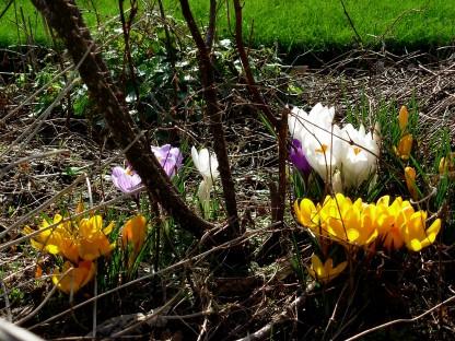 Fiori a febbraio nel giardino di Inverewe