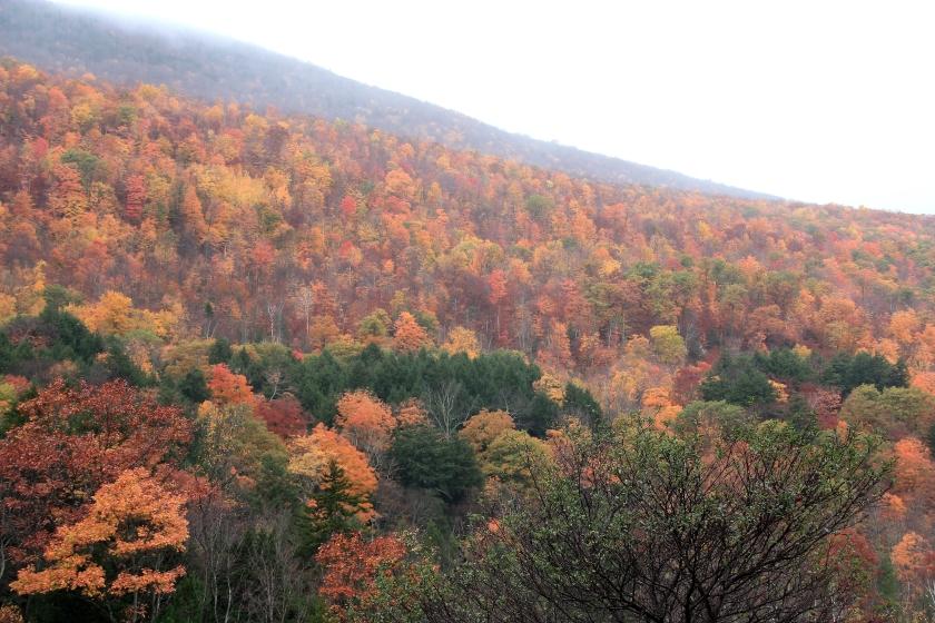 Foliage nel New England