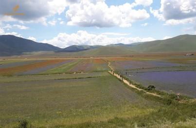 La fioritura delle lenticchie a Castelluccio
