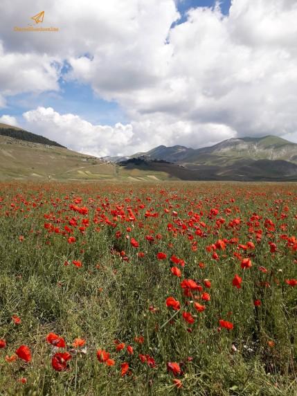 Piana di Castelluccio in fiore
